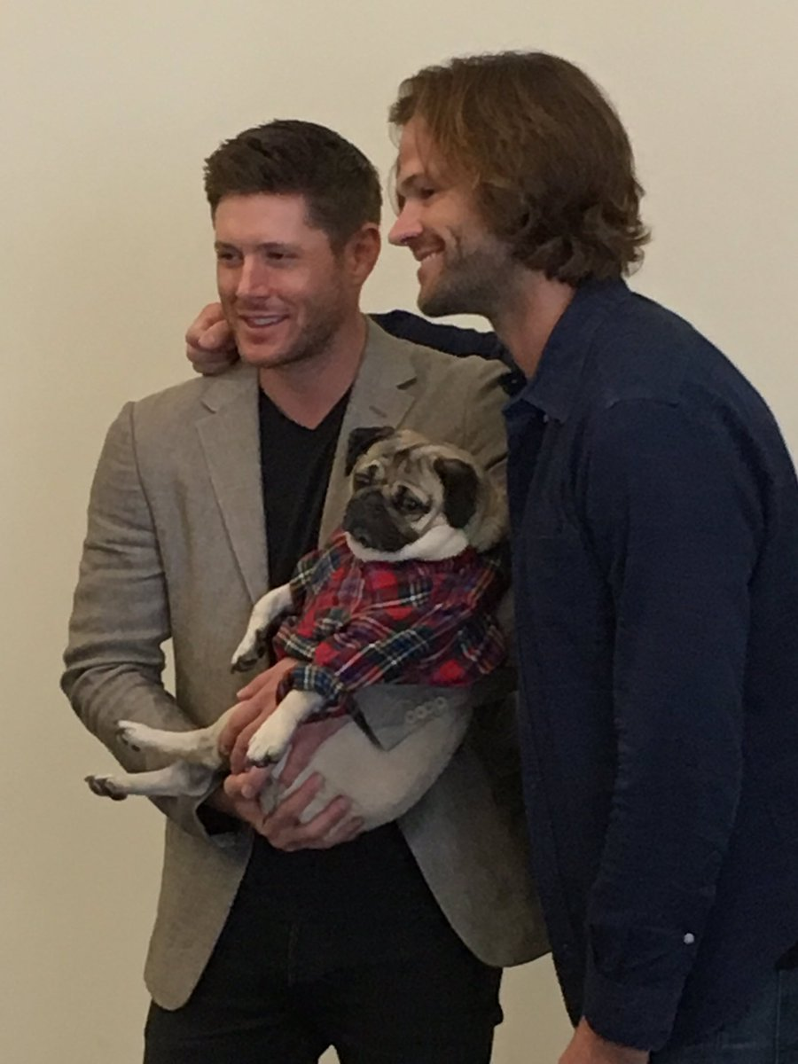 Before the #Supernatural #SDCC panel, @jarpad and @JensenAckles met @itsdougthepug backstage https://t.co/EHTzgNAekE
