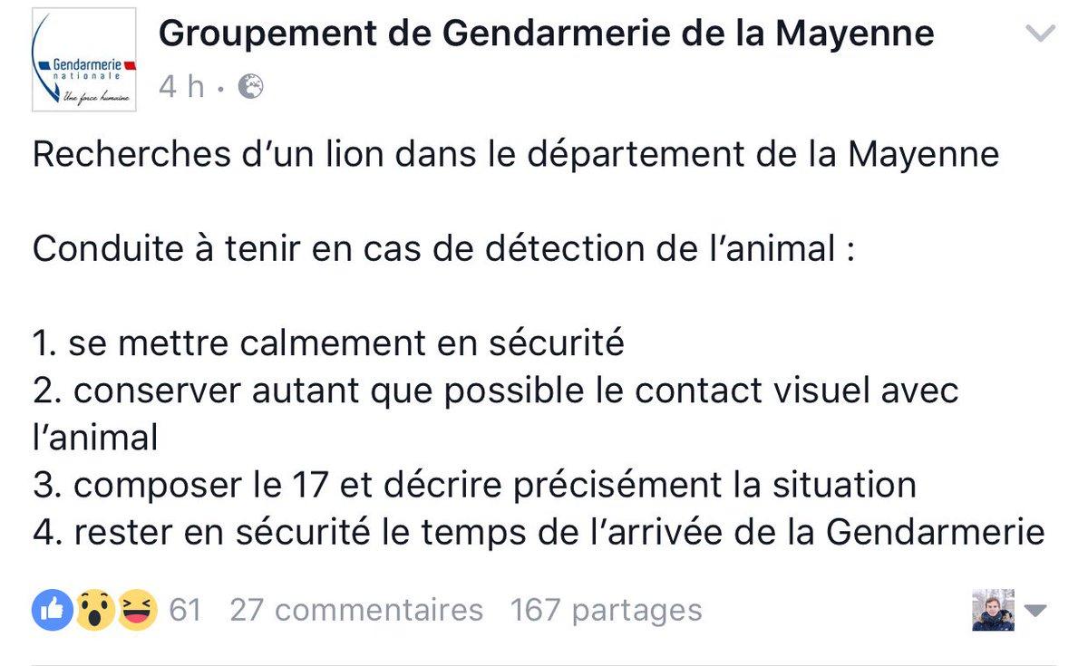 La gendarmerie de la Mayenne est à la recherche d'une lionne qui court dans la nature. Elle communique sur Facebook des mesures de sécurité