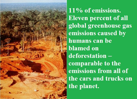 11% of all greenhouse gas emissions caused by humans come from deforestation. #ActOnClimate #KeepItInTheGround #ClimateChange <br>http://pic.twitter.com/1gg08vSc2G