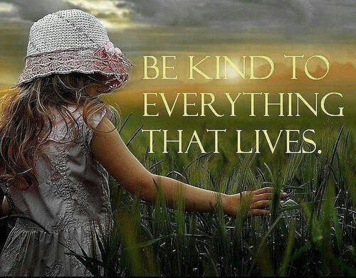 Spread kindness to everything and everyone. #inspiration <br>http://pic.twitter.com/qiiwqmLVsr