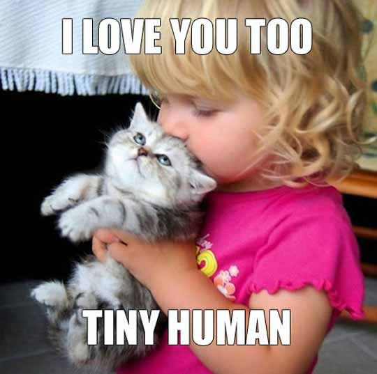 Some human slaves are not too bad.  #Catsoftwitter #Meow #JustSaying  #Cats<br>http://pic.twitter.com/g0r8E5eHV5