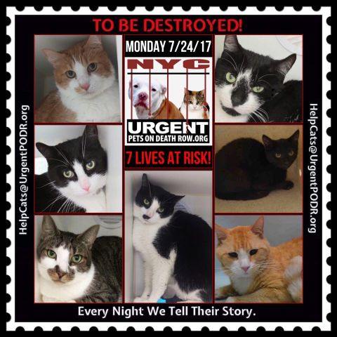Email Them!! They will Help U!! *7*Precious Souls&gt;TBD 7/24/17!! Adopt/Foster/Pledge/RT!!! Killing at12PM #NYC   http:// nyccats.urgentpodr.org/help-is-here/  &nbsp;  <br>http://pic.twitter.com/YBw9HCFJZU