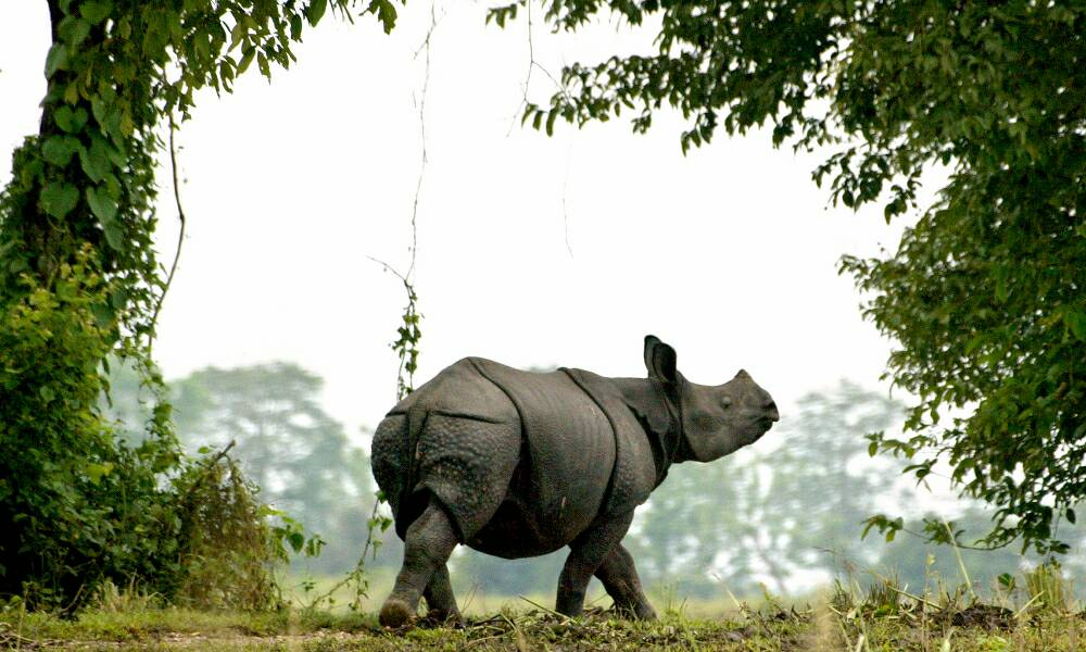 #Asia&#39;s #rhino horn trade is thriving:  http:// international.thenewslens.com/article/74121  &nbsp;  <br>http://pic.twitter.com/BjhAqGlVAg