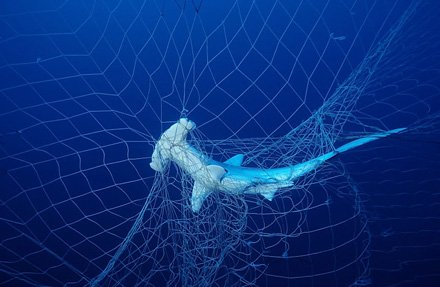 Every year 30 million #sharks are caught accidently as bycatch. Changing fishing practices could stop the slaughter #SharkWeek<br>http://pic.twitter.com/UTMogNwXE7