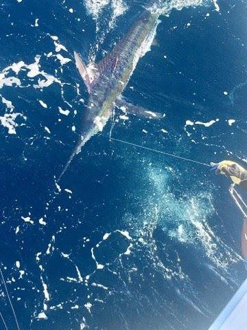 Cabo, MX - Caliente went 5-6 on Blue Marlin.
