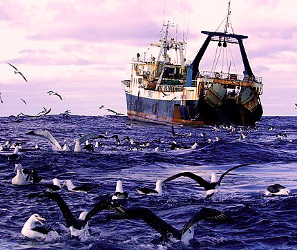 Discards may especially attract #seabirds with high energetic demands or few alternative food options #ornithology  https:// academic.oup.com/beheco/article -abstract/doi/10.1093/beheco/arx097/4004793/A-comparative-analysis-of-the-behavioral-response?redirectedFrom=fulltext &nbsp; … <br>http://pic.twitter.com/DNMyJvCX64