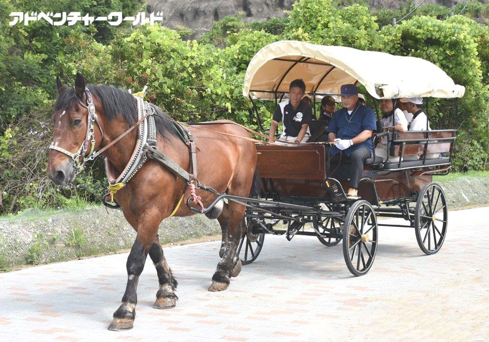 馬と語るNEWエリア「HORSE CAMP(ホースキャンプ)」 7月22日(土)OPEN prw.kyodonews.jp/opn/release/20… #アドベンチャーワールド #乗馬 #馬車体験 #アトラクション #馬