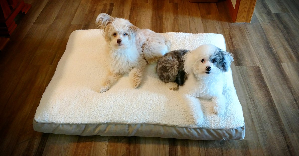 Happy #Monday!! We love our new snuggle bed that Mommy got us for our birthdays!  #dogsoftwitter #cute #MondayMotivation<br>http://pic.twitter.com/hxCjg51hqK