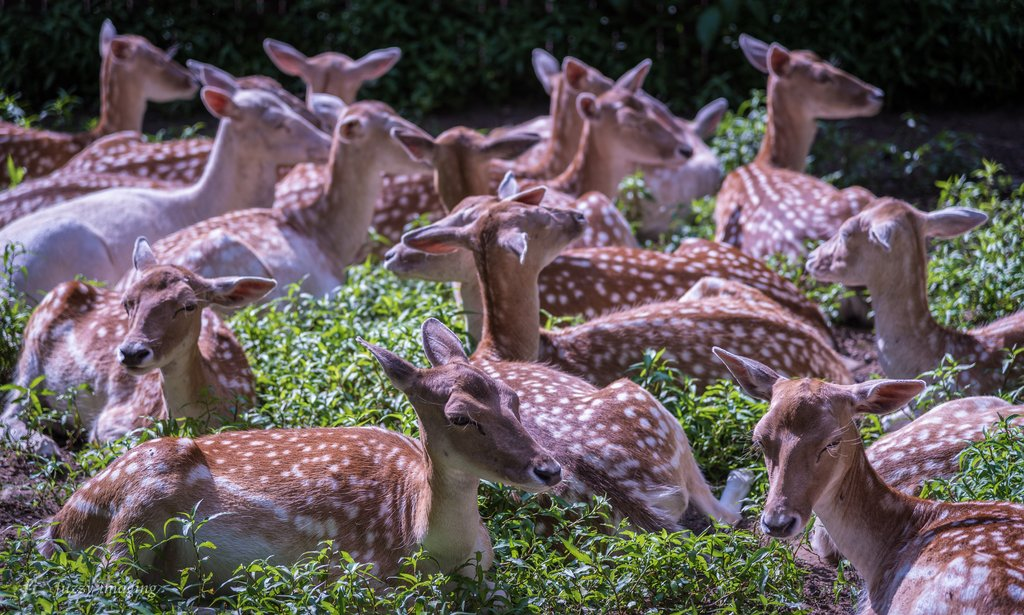 &quot;Field of Deereams - The deer crop is really coming in this year [OC][5860x3522]&quot; via #Animal Porn Subreddit - Courtesy of emgarf <br>http://pic.twitter.com/gu5vcVeVmI