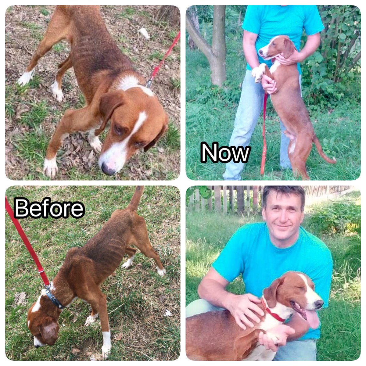 #AdoptDontShop #Mr Clever BORIS #waiting for a human  #easy adoption process #DM for info #he was discarded as he wouldn&#39;t hunt  <br>http://pic.twitter.com/z43zs1w5NR