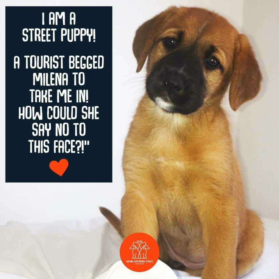 #adoptdontshop #Milena was pleased to take care of her #she&#39;s off to Czech Republic today to a brand new life  #safe travels puppy <br>http://pic.twitter.com/gVI4ztrJgP