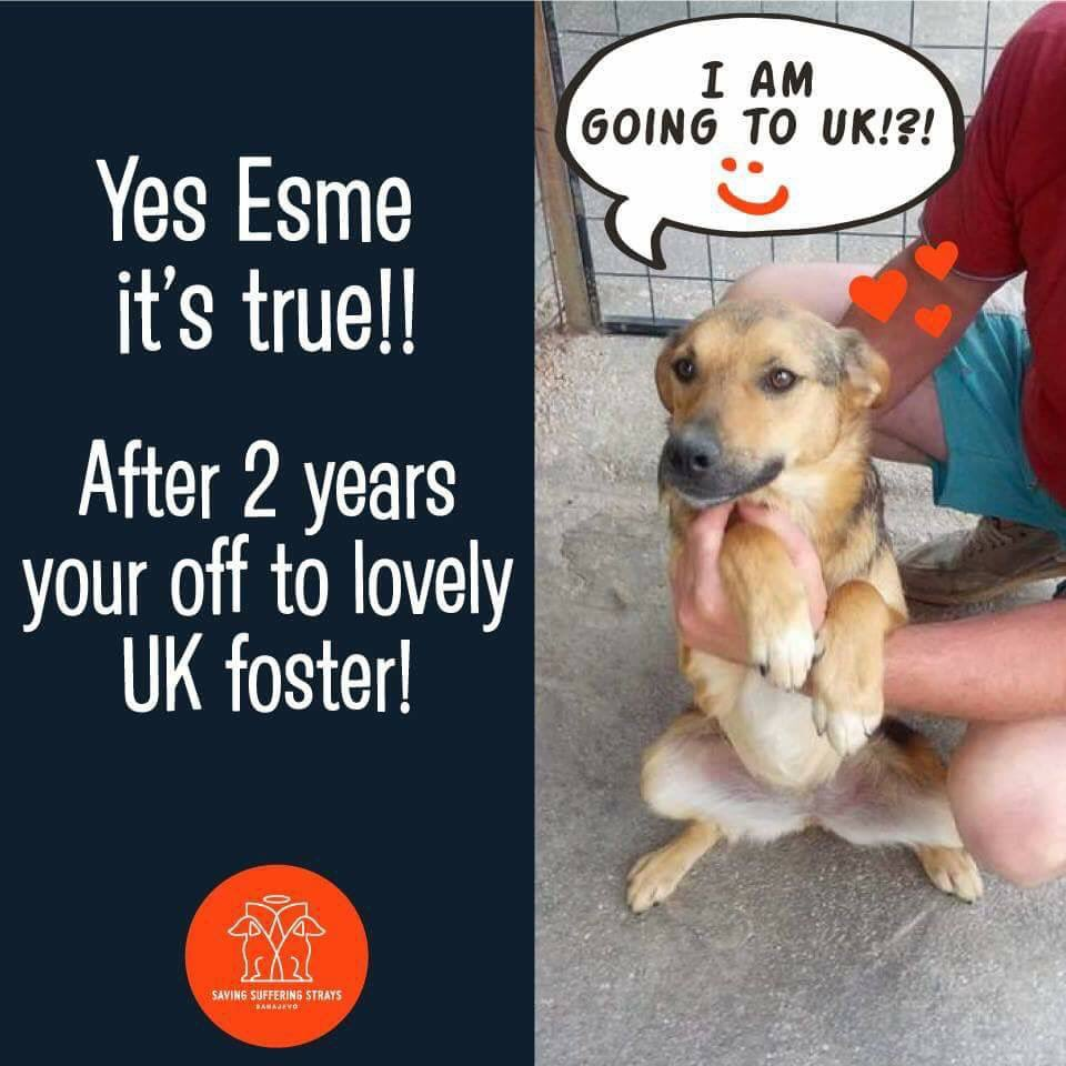 #AdoptDontShop #ESME is off to UK foster home  #will be up for adoption August time  #DM for info<br>http://pic.twitter.com/rG4a9k5hJM