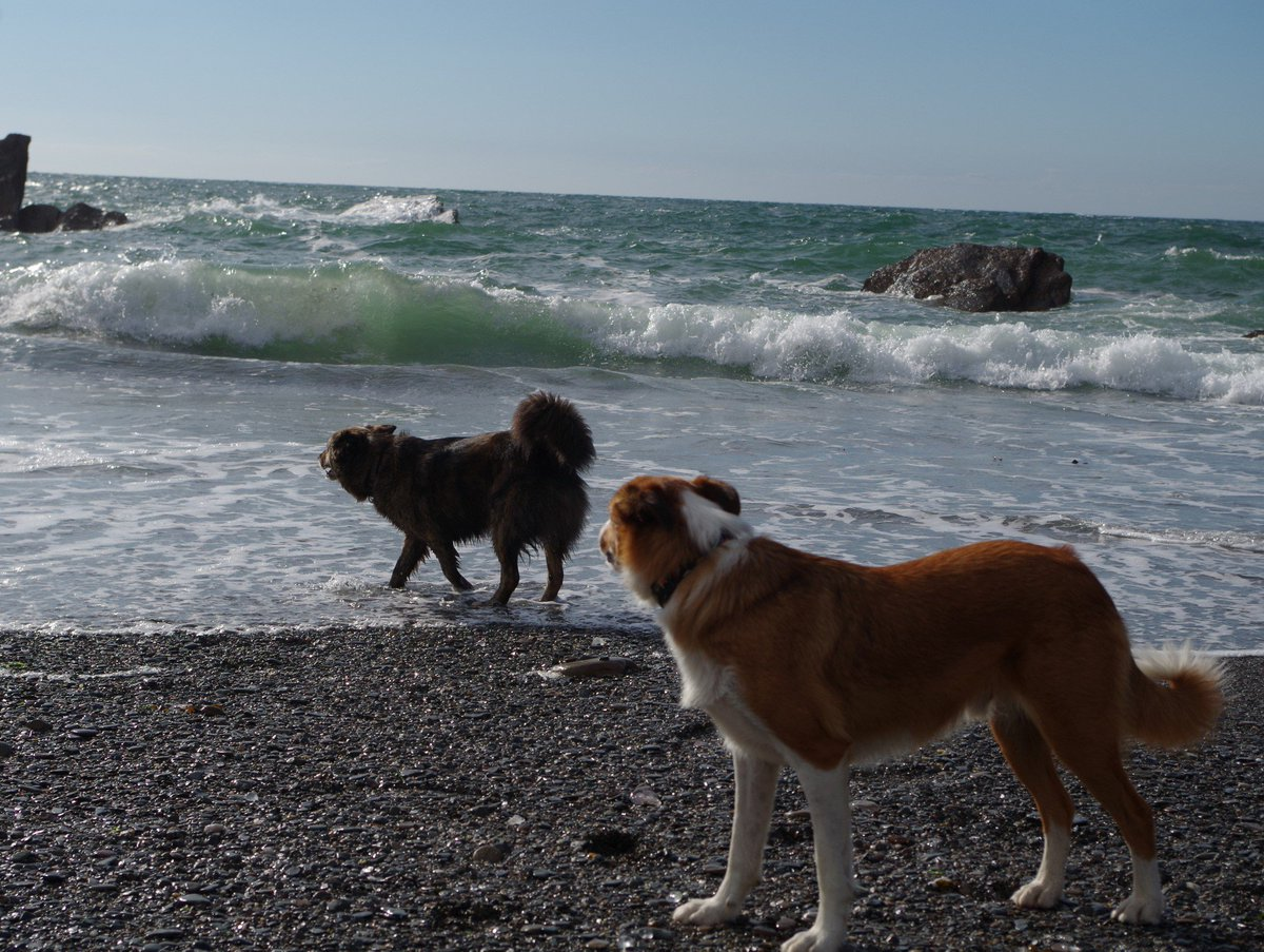 Wow! Look at those waves! #beach #SeaSide @BCTGB @dogcelebration #dogsoftwitter #MondayMotivation<br>http://pic.twitter.com/xRRCOrNZQg