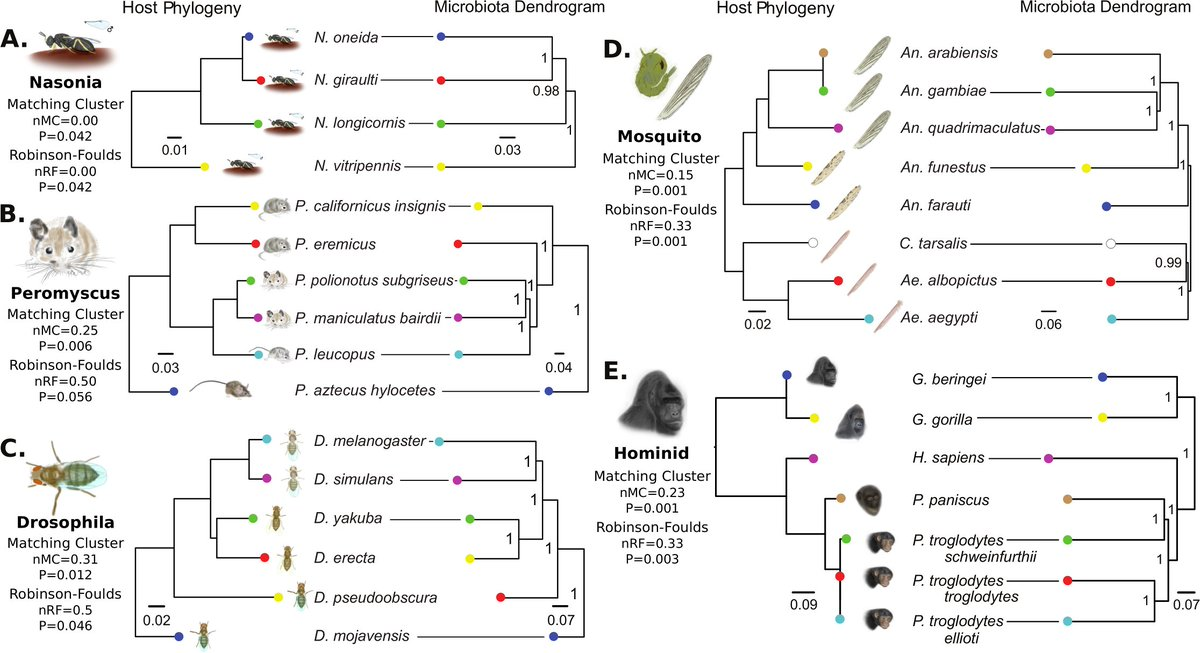 Phylosymbiosis: co-evolution of hosts-symbionts along phylogeny  http:// bit.ly/2gvzf62  &nbsp;   via @PLOSBiology #Autopoiesis #Evolution #Biology <br>http://pic.twitter.com/G7WtaY13oA