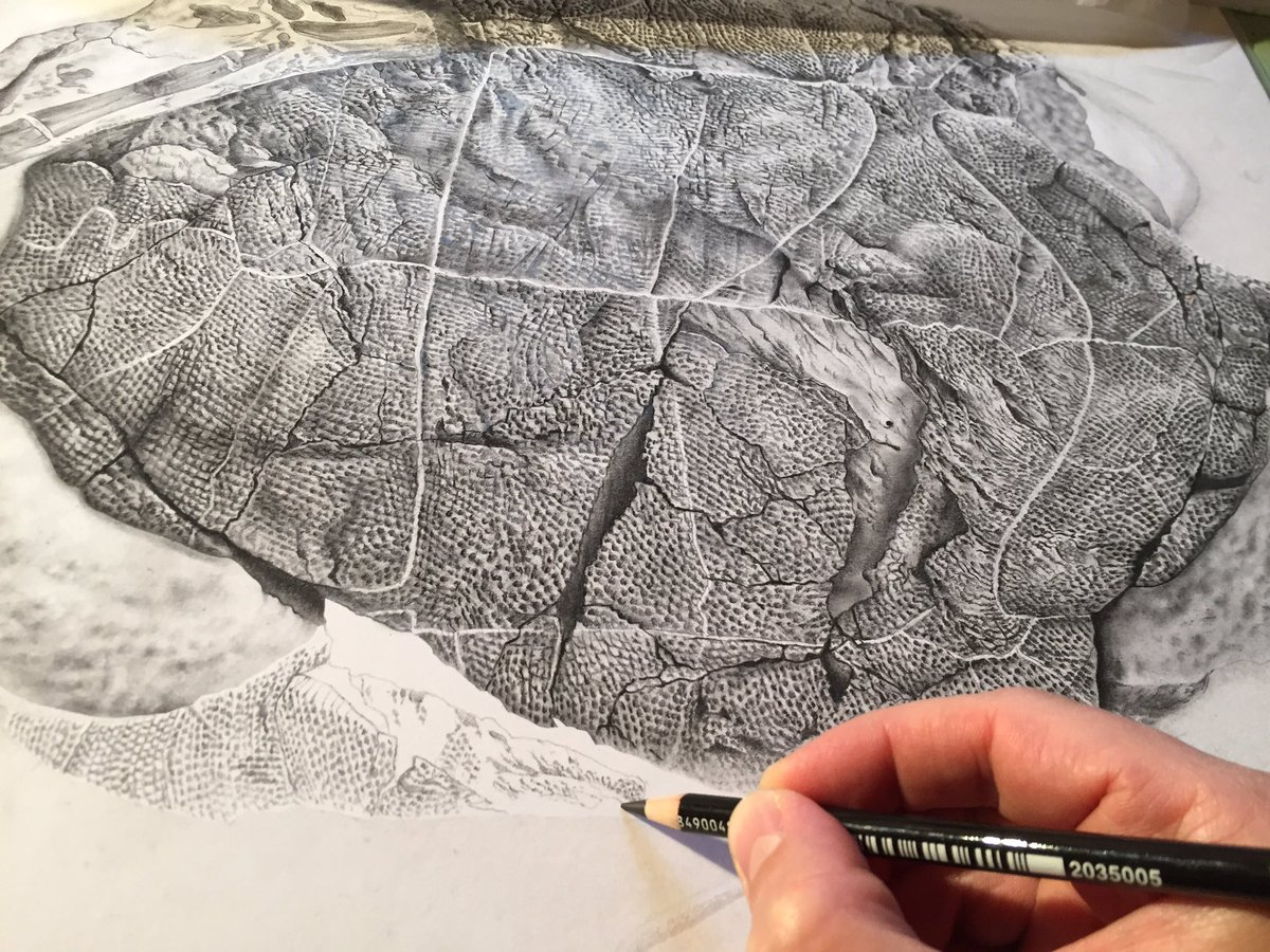 Wrapping up a monster carbon illustration of a special fossil turtle shell of Basilemys. More to come! @Jordan_Mallon #sciart #paleoart<br>http://pic.twitter.com/7HneX7mbMb