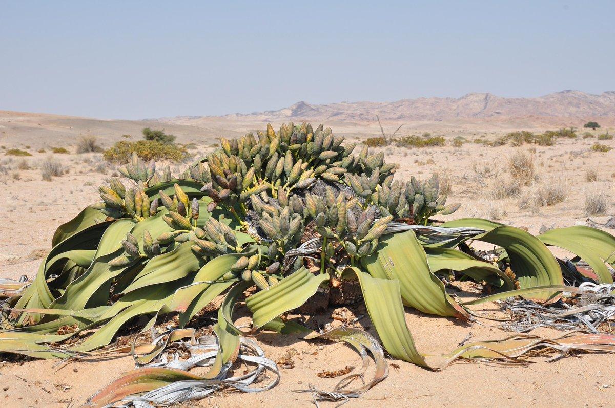 British Cactus & Succulent Society on Twitter: