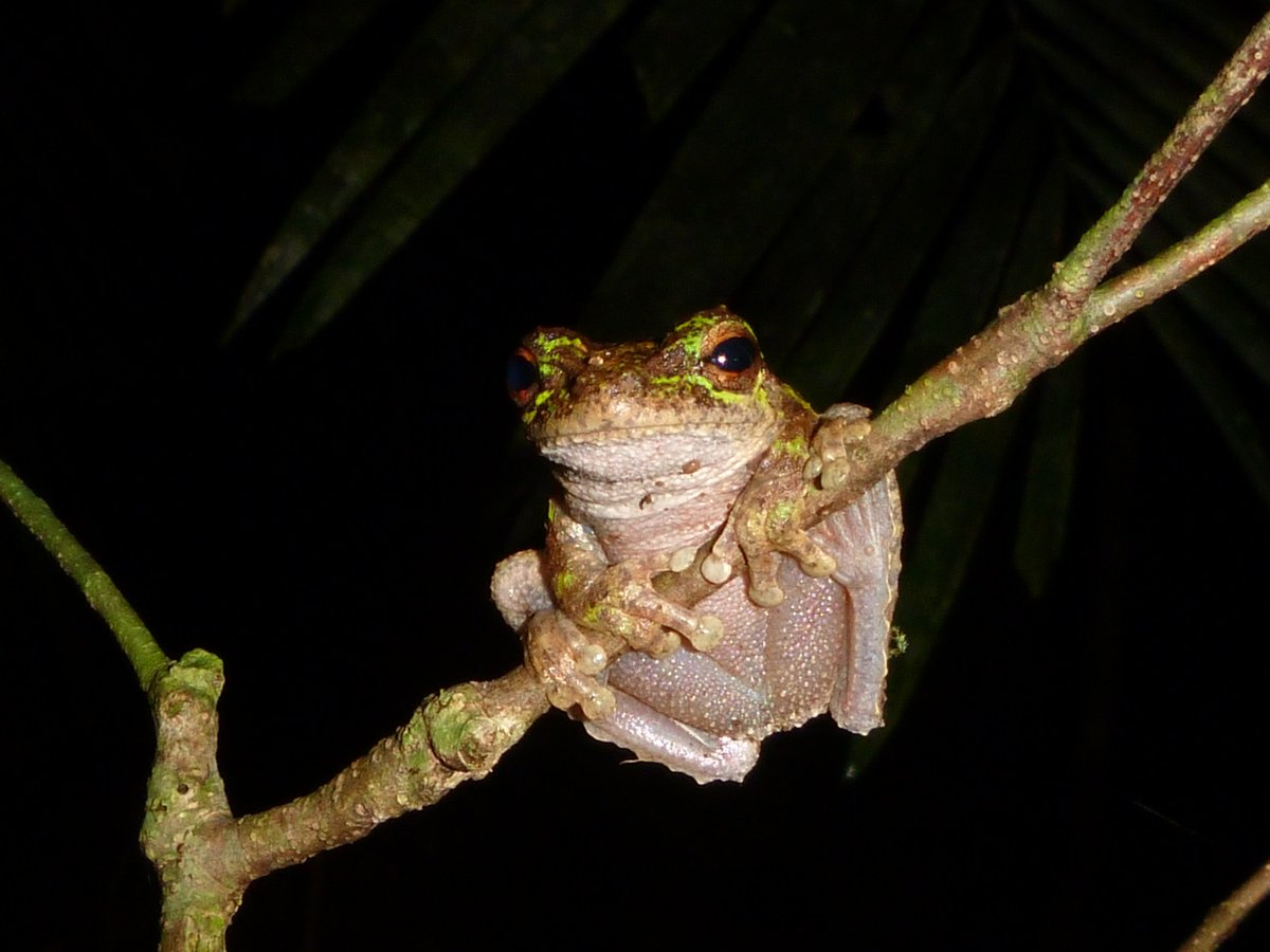 New research! Realistic heat pulses protect frogs from disease under simulated rainforest frog thermal regimes  https:// fesummaries.wordpress.com/2017/07/24/rea listic-heat-pulses-protect-frogs-from-disease-under-simulated-rainforest-frog-thermal-regimes/ &nbsp; …  #frog <br>http://pic.twitter.com/5uhyjRueJf