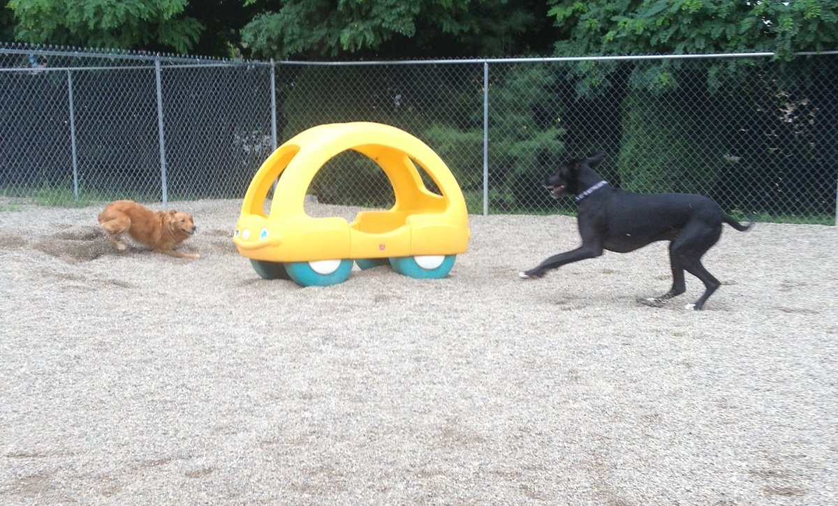Maggie Mae and Zeus play keep away