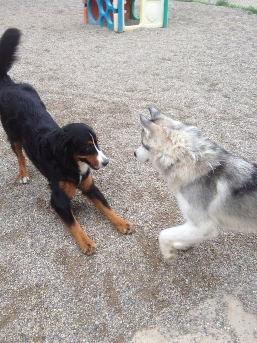 Zooey asks Rocko to play