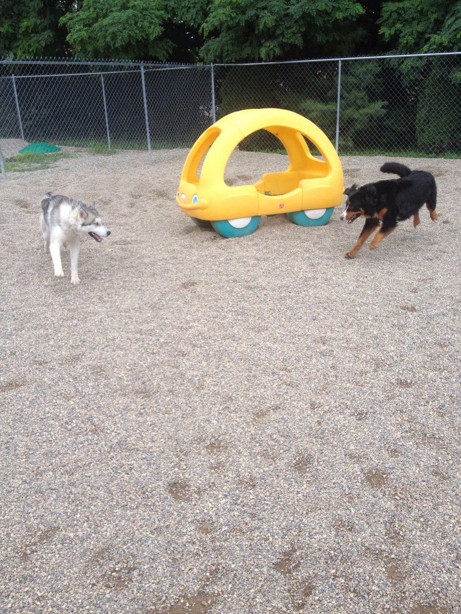 Zooey and Rocko love to run!