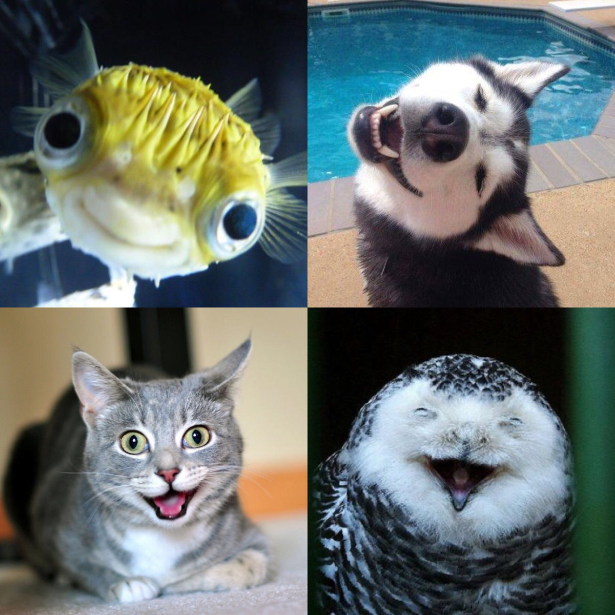 SMILE #happy #smile #smiley #smiling #dogs #cat #birds #fish #petshop <br>http://pic.twitter.com/GRIU9ulxhN