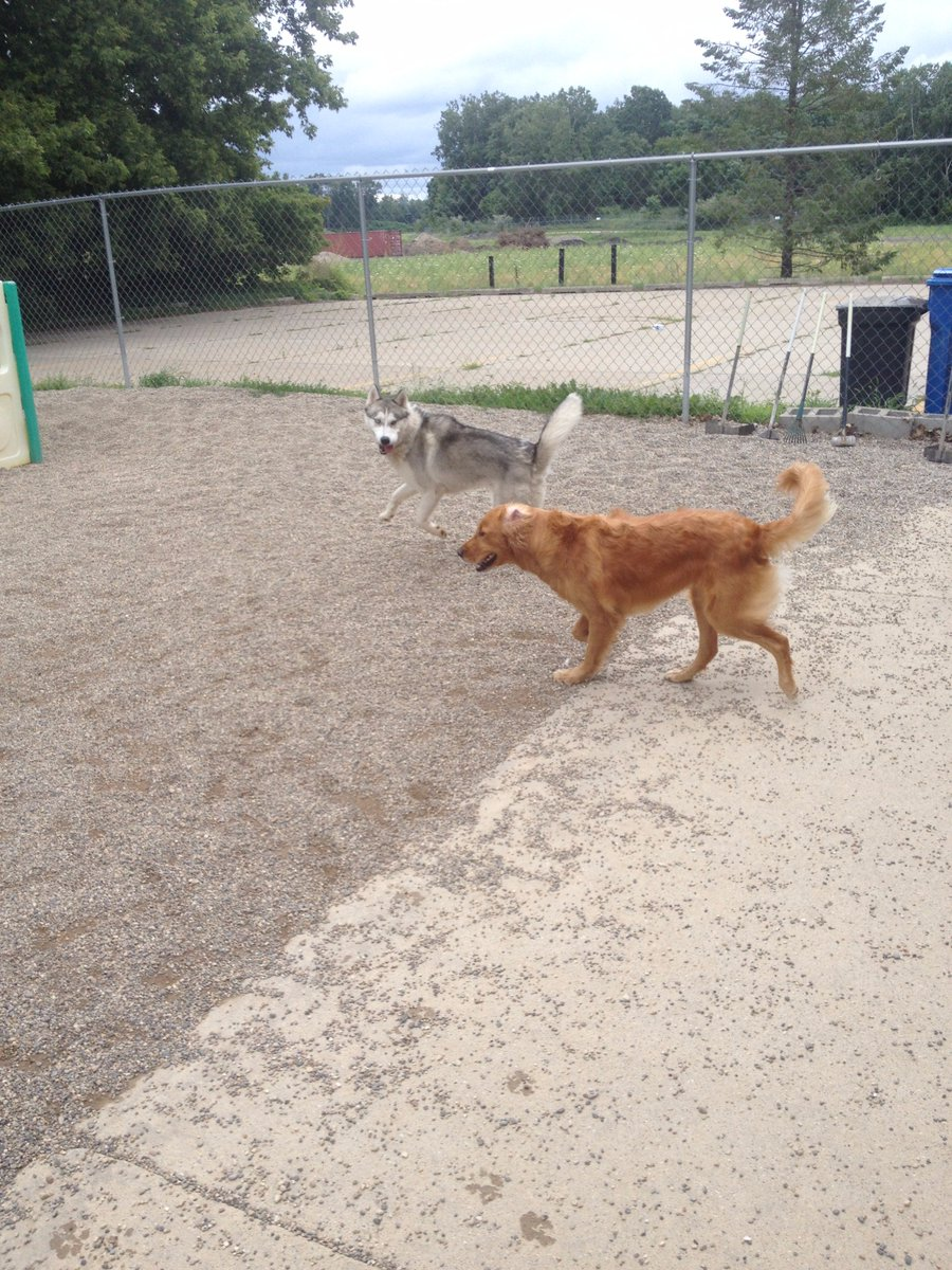 Rocko and Maggie Mae race off