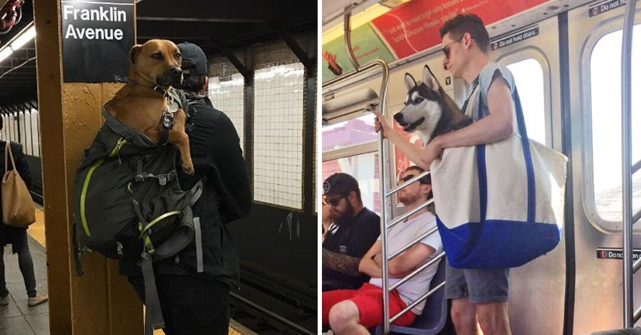 #dogs #dog #people #today #life  http:// buff.ly/2uq4FSl  &nbsp;   NYC Subway Bans Dogs Unless They Fit Into A Bag,<br>http://pic.twitter.com/pMtf2Ib7YO