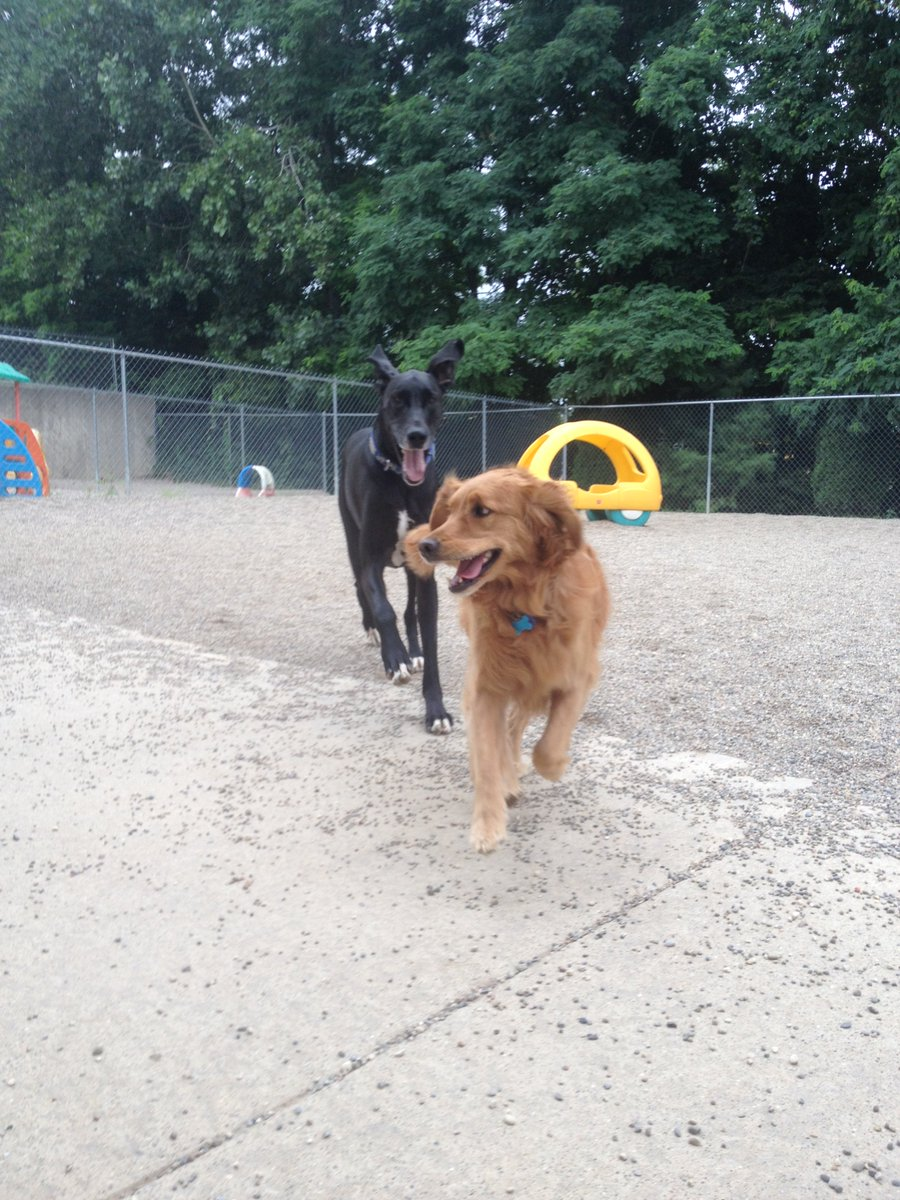 Rosie and Zeus race in for a picture