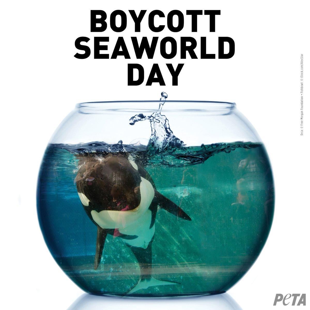 Today is #BoycottSeaWorldDay. RT & tell everyone why you boycott #SeaWorld!