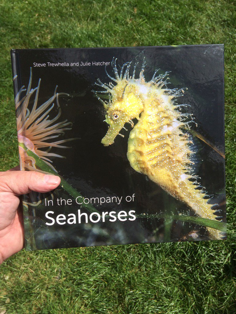 Our 10 year account of diving with British seahorses , super chuffed #seahorse #seahorses #seagrass #MarineBiology <br>http://pic.twitter.com/3sZ3ABGSBp