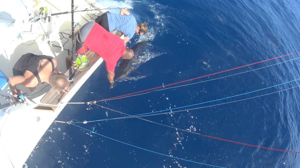 Tonga - Blue Marlin Magic went 3-5 on Blue Marlin, including 2 double headers.