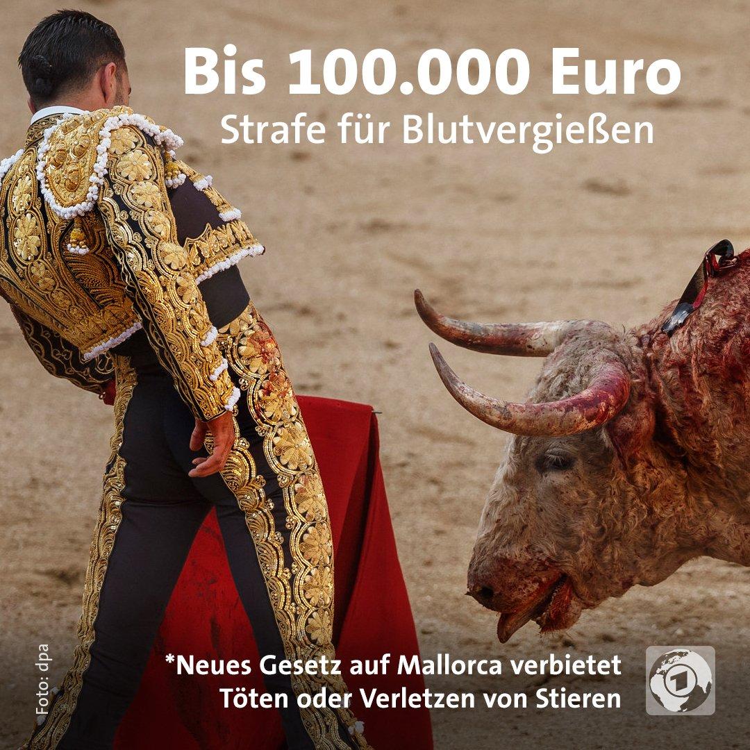 Künftig dürfen #Stierkämpfe auf Mallorca nur noch zehn Minuten dauern.  Außerdem dürfen die Tiere nicht mehr verletzt oder getötet werden.