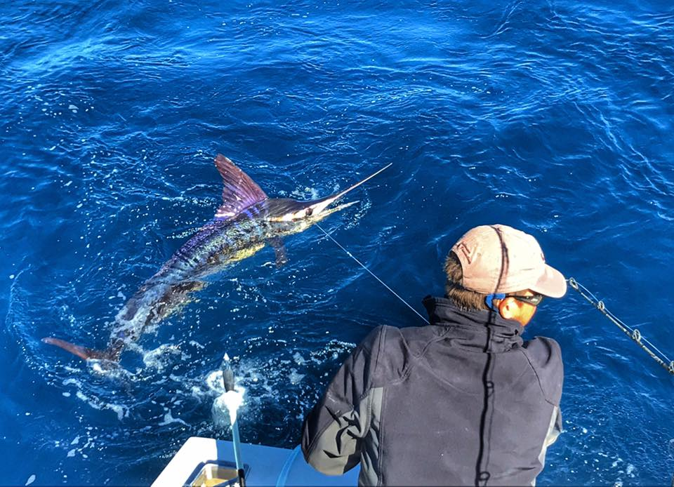 Exmouth, Aus - Peak Sportfishing released a Striped Marlin and 3 Black Marlin.