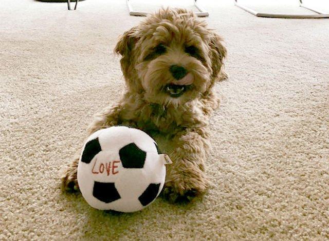 Does your carpet match the dog? #EDbypetsmart