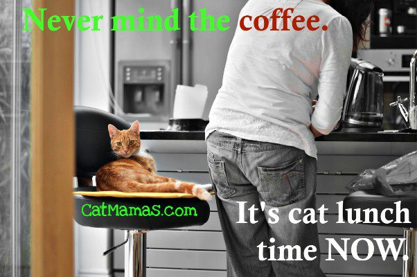 Not sure of your priorities? Just ask your #cat! #funnycat #pets <br>http://pic.twitter.com/YH1HAfYMJK