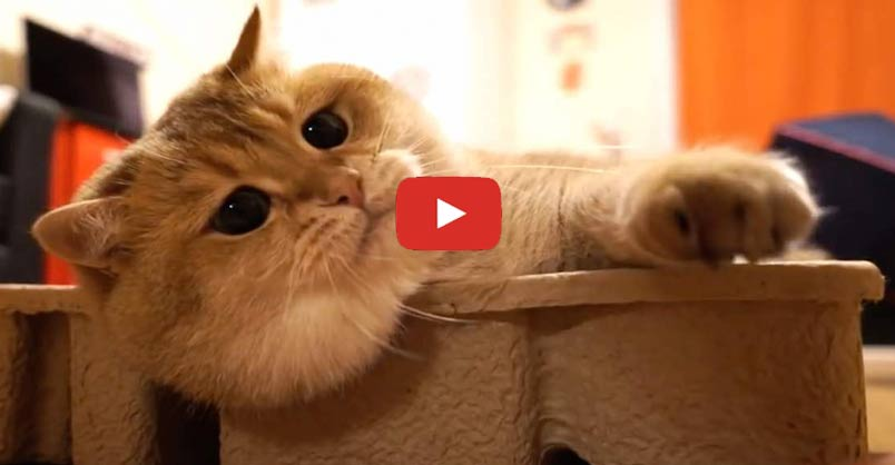 I Will Fit in This Box No Matter What ! What is it about cats and boxes?? CLICK to watch >