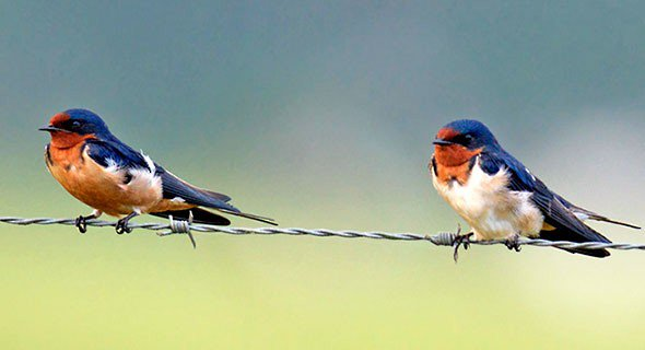 Positive correlation between telomere length and total antioxidant capacity of social mates #ornithology  https:// link.springer.com/article/10.100 7/s00265-017-2352-y &nbsp; … <br>http://pic.twitter.com/RoXjQjrBeT