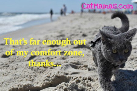 Ever seen a #cat on the beach? I never have (&amp; I grew up in Australia)! #ilovecats #pets <br>http://pic.twitter.com/MSCCzKdbkz