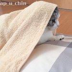 朝から枕元で暴れ狂うのでタオルで包みました。 pic.twitter.com/JQ8x6i5Zo0