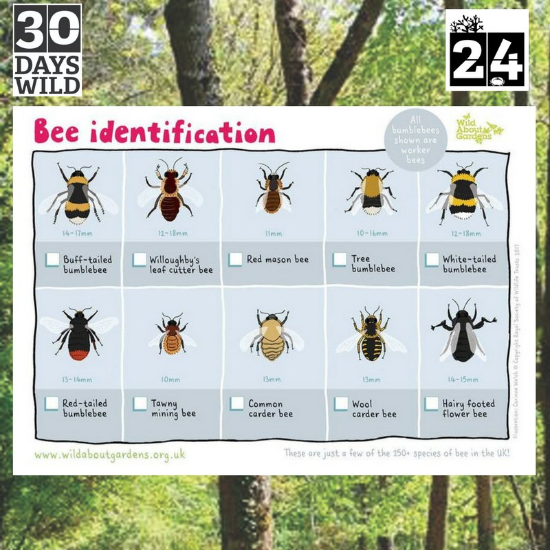 What bees have you spotted this #weekend? #wildlife @Team4Nature300<br>http://pic.twitter.com/n6dFYaUgOj