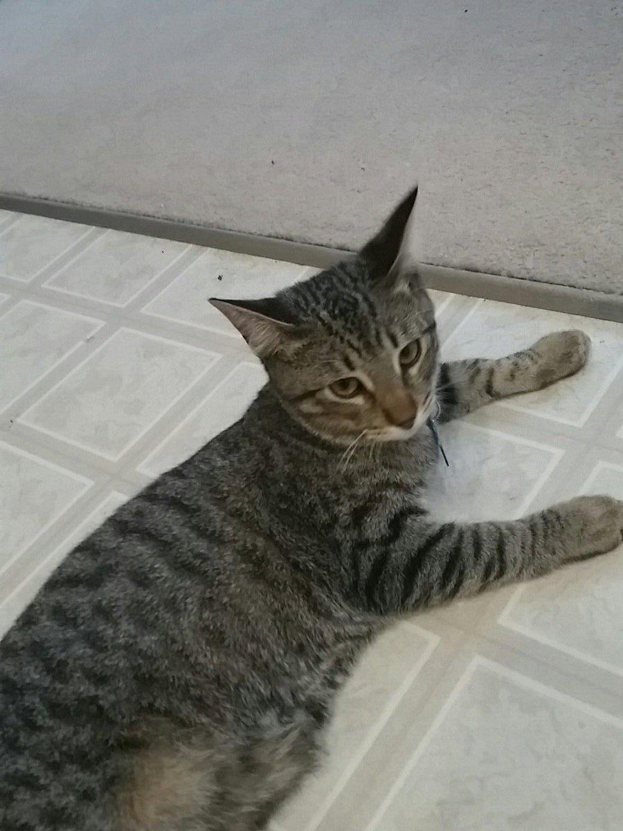 And my cat thinks I'm crazy 😂😂 #MashAllah #HesSoCute