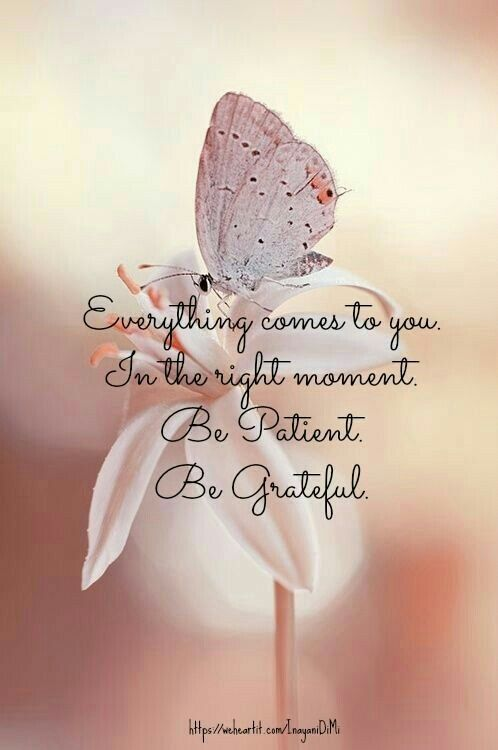 Everything comes to you in the right moment. Be patient. Be grateful. #TrustTheProcess #gratitude <br>http://pic.twitter.com/zzDMrxgkCB