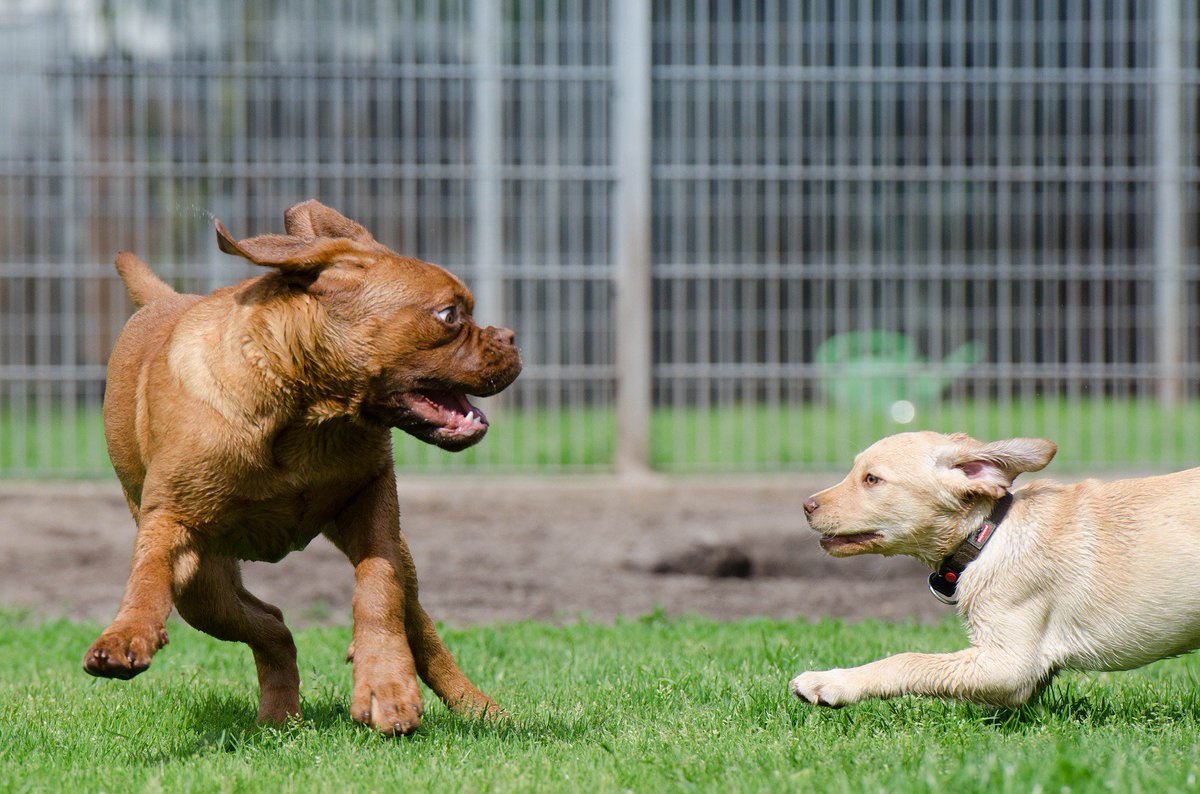 Playing dogs are wonderful! #dog #friend <br>http://pic.twitter.com/VbGzIcyxL1