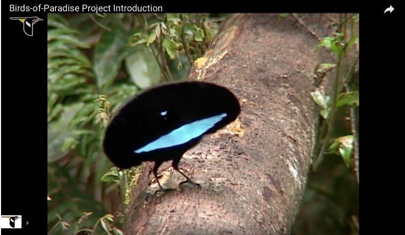 The @CornellBirds Macaulay Library Launches Archive of 150,000 Bird Calls &amp; Animal Sounds  http:// ow.ly/fmWd30dRTZz  &nbsp;   #ornithology #bioacoustics <br>http://pic.twitter.com/ZnZUglbdXO