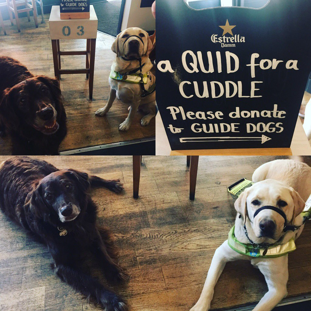 Cadbury helping Pilot collect for Guide Dogs charity! #guidedogs #charity #give #love #surbiton #kingstonuponthames<br>http://pic.twitter.com/g06C8S8G0a