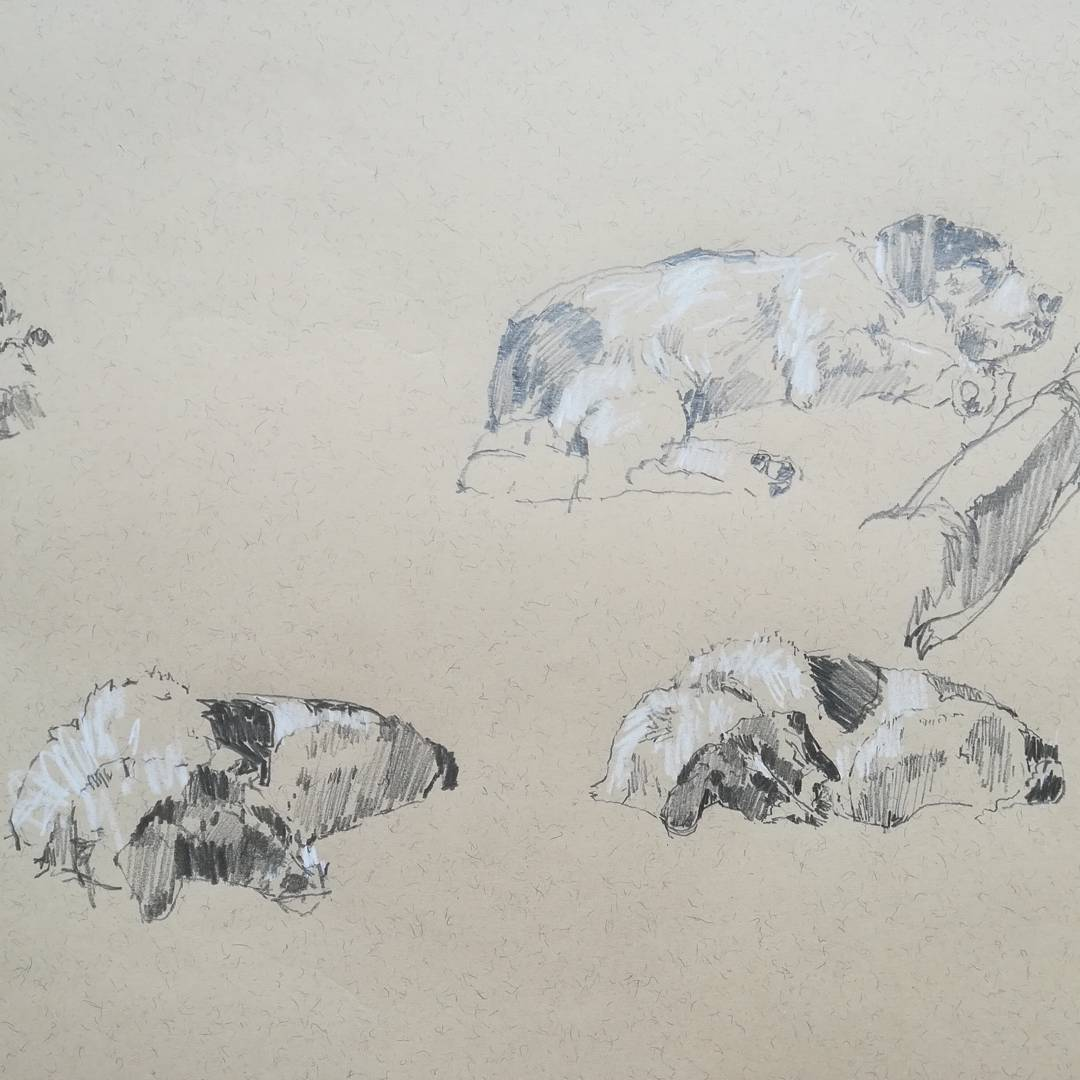 More drawings of Moo asleep of course. @artpublishing @info_northcote #pencil #drawings #dogsoftwitter #dogs<br>http://pic.twitter.com/O5zTDo1E2v