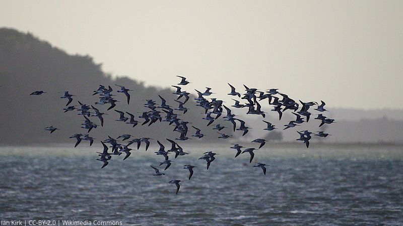 Geolocator wetness data accurately detect periods of migratory flight in two #shorebirds  http:// ow.ly/jDIC30dRVzI  &nbsp;   #ornithology @WaderStudy<br>http://pic.twitter.com/JagqxHa10K