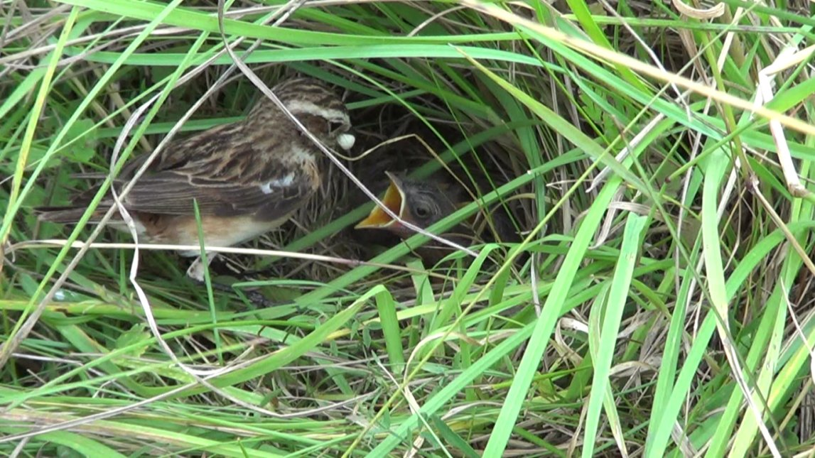 Immigration buffers the effects of low productivity in a stable whinchat population #ornithology by @JenniBorder  http:// onlinelibrary.wiley.com/wol1/doi/10.11 11/jav.01305/abstract &nbsp; … <br>http://pic.twitter.com/A9qLVAVquM