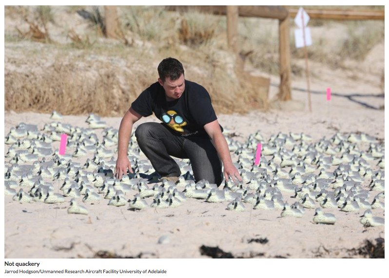 Fake duck test shows drones and AI beat humans at bird census  http:// ow.ly/PLAU30dTenE  &nbsp;   #ornithology @newscientist<br>http://pic.twitter.com/LvZNwTvSxq