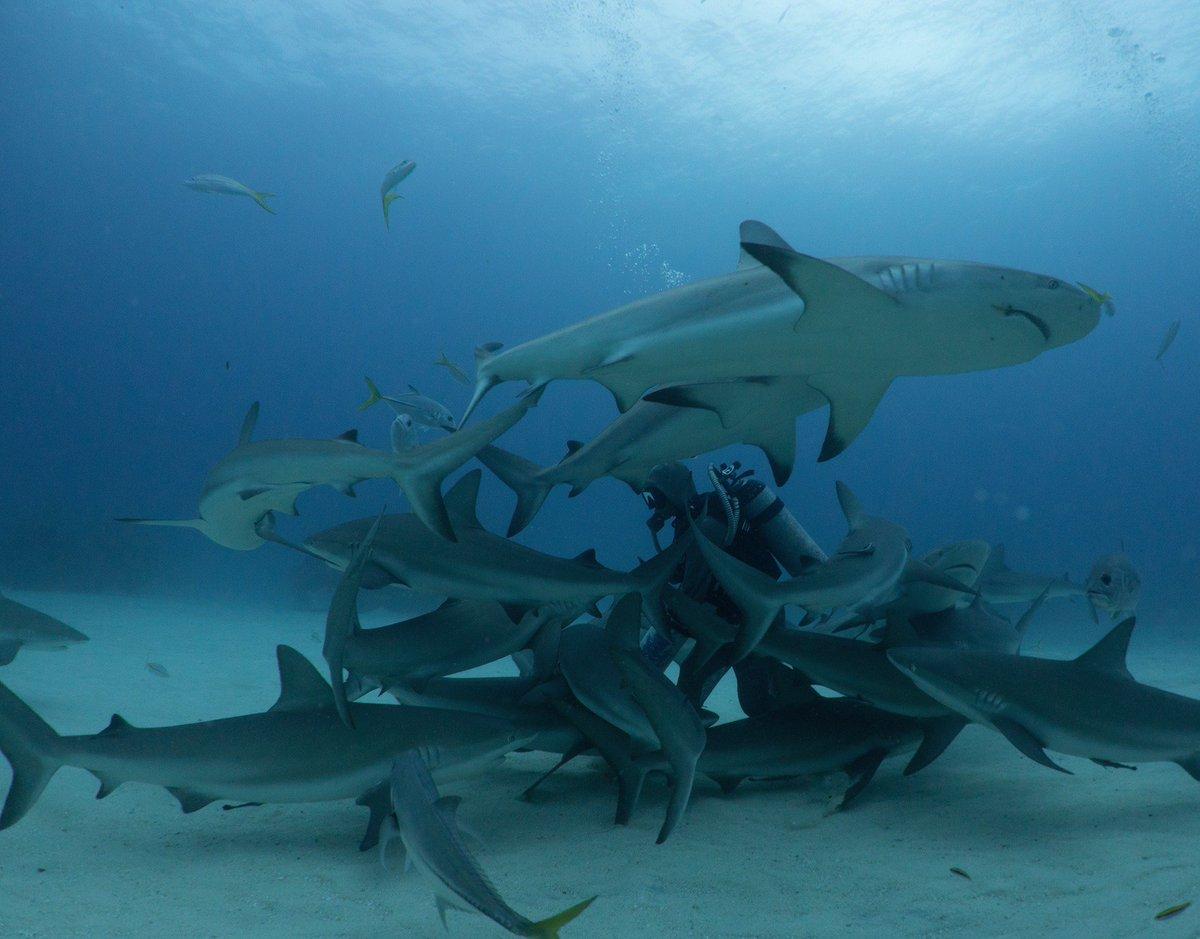 Life is better with sharks. #exploration #education #conservation #SharkWeek #protectsharks #sharklife  @projectaware @SharkStudies<br>http://pic.twitter.com/FKHvoevYvI